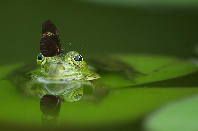 カエルと蝶