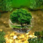 森の小さな木