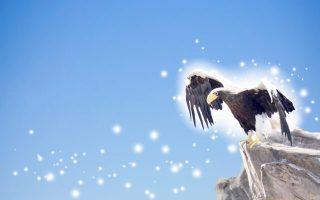 飛び立とうとする鷲