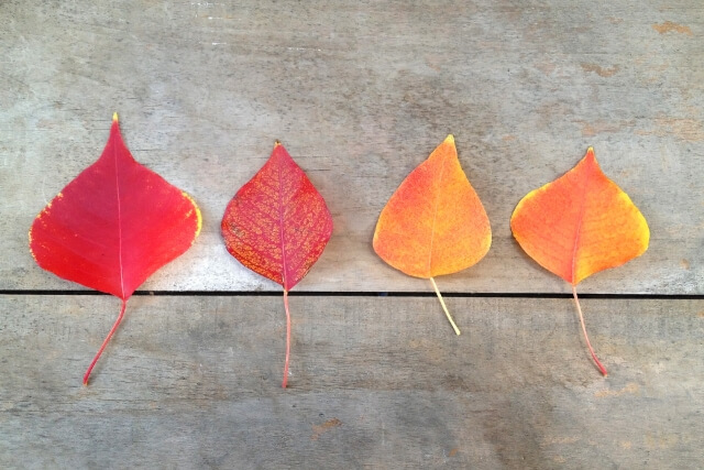 葉っぱのファミリー