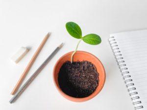 アイデアと芽の成長